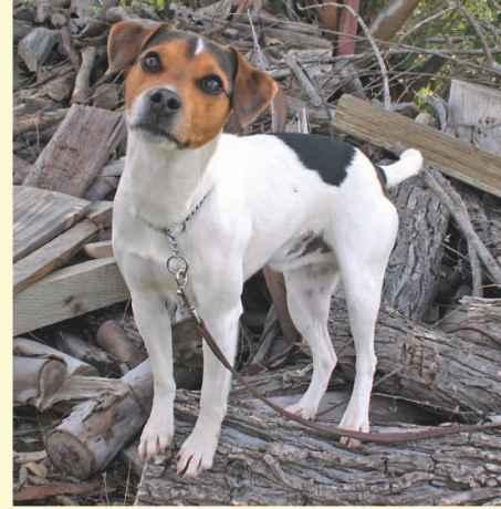 Best Dog Breeds Agility Training