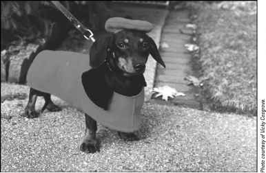 Expensive Clothes For Dachshunds