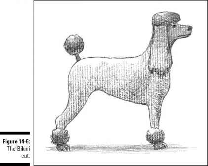 The Bikini Cut Dog Grooming Dog Obedience Guides