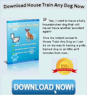 Housetraining Guides For Your Puppy