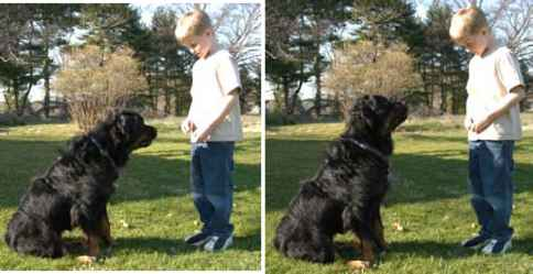 Dog Clicker Training Sugar Bear
