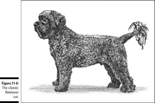 Retriever Cut Portuguese Water Dog
