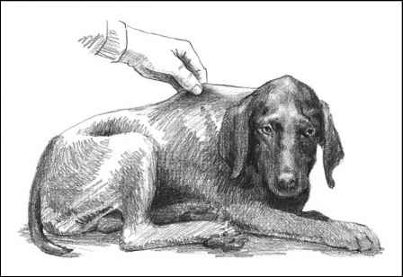 Skin Dehydration Test Dog