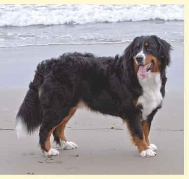 Pictures Varieties Dog Breed
