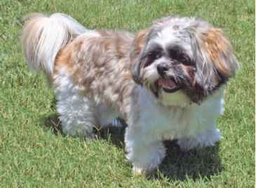 Luxating Patella Small Breeds