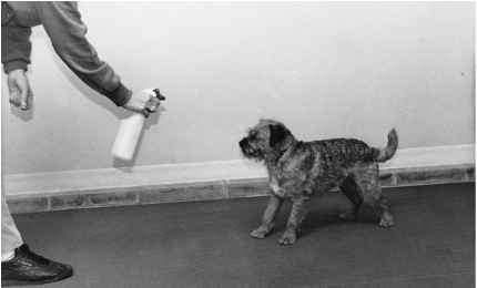 Spray Bottle With Dog
